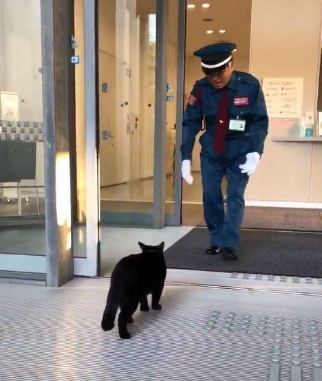 黒猫に近づいて