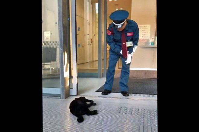 死んだふり?玄関前で突然ゴロンとする黒猫