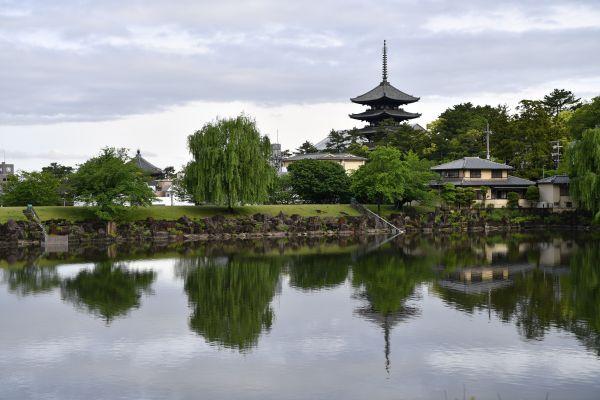 通いつめた奈良・興福寺の五重塔