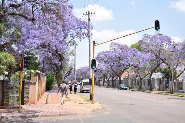 南アフリカの信号機、引くとこんな感じです