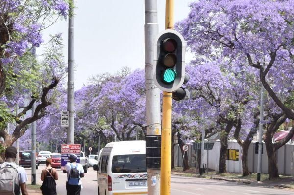 1枚目。咲き誇るきれいな紫色の花はジャカランダといいます。支柱の黄色は熊本地震の「ライオンデマ」に写り込んでいたものと同じです。正解は南アフリカのプレトリアでした。