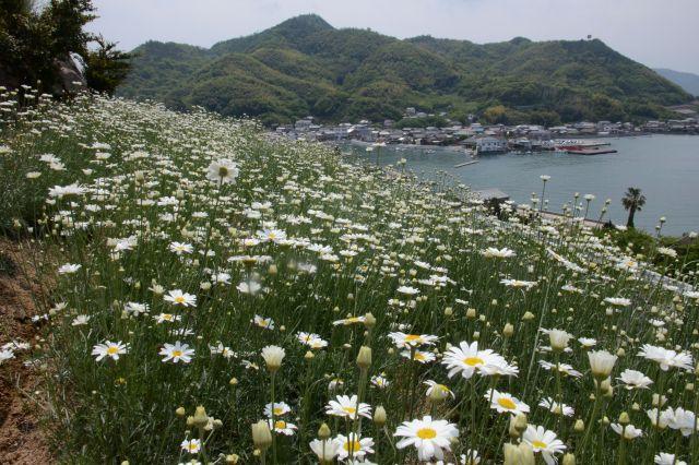 広島・因島の遠景、島内の造船会社では多くの外国人労働者が働いている