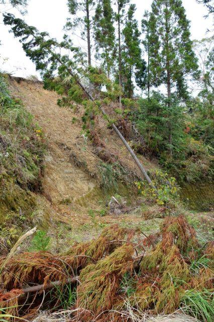 被害発覚から約2年経った海老原さんの山。9月の台風では雑草が生えていた斜面で土砂崩れが起き、残っていた木も倒れた=宮崎市、2018年11月21日
