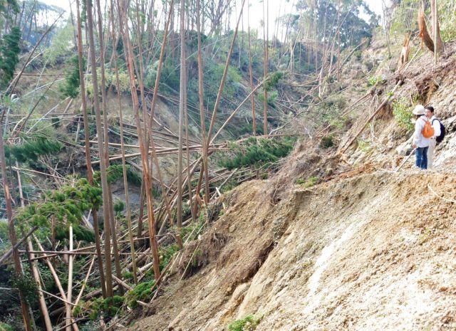 9月に被害が発覚した山林。山肌がむき出しになったところに、台風の雨風で地面が緩み土砂崩れが起きた=2018年10月10日、宮崎県国富町