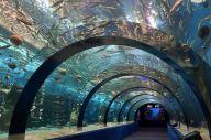 浅虫水族館にある「トンネル水槽」