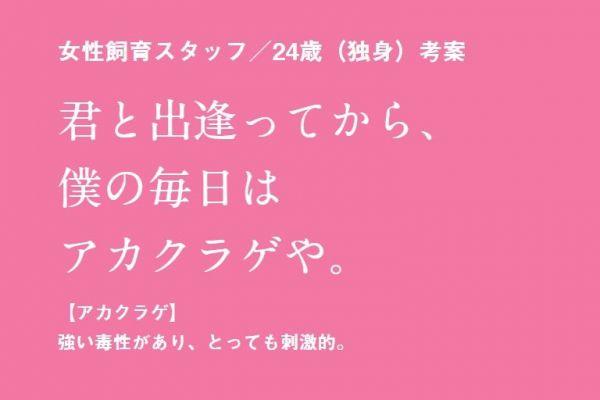京都水族館の飼育スタッフが考えた「冬の水族館デートで使える告白ワード」の一例