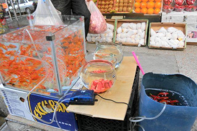 正月前のイランでは金魚があちこちで売られています