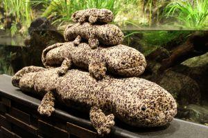 ぬいぐるみ買ったら店員が一斉に大きなかけ声で… 京都水族館に聞く