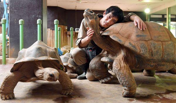 渥美良さん 飼育して産まれたゾウガメ、60頭以上/体感型動物園「iZoo」 飼育員(46歳)=伊ケ崎忍撮影