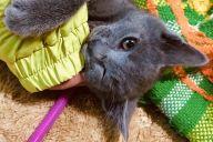 話題の写真に登場する子猫「ニョロリ」