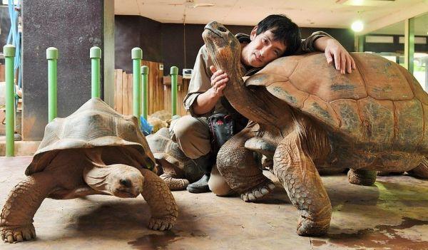 推定年齢130歳のガラパゴスゾウガメに寄り添う渥美良さん。名前は「ラック」で、国内には3頭しかいない希少動物だ=2018年10月26日、静岡県河津町のiZoo、伊ケ崎忍撮影