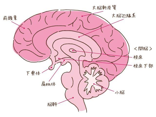 脳の構造を表した図。「背外側前頭前野」と「下前頭回」は、「前頭葉」にある部位
