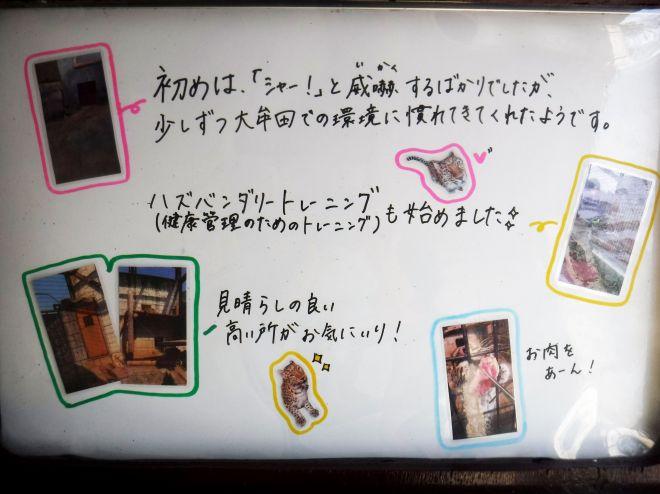 大牟田市動物園に貼り出されているポンの紹介