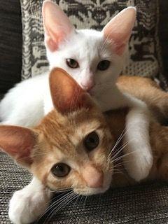 かつて保護猫だった茶トラのビッカと、白ネコのニーナ