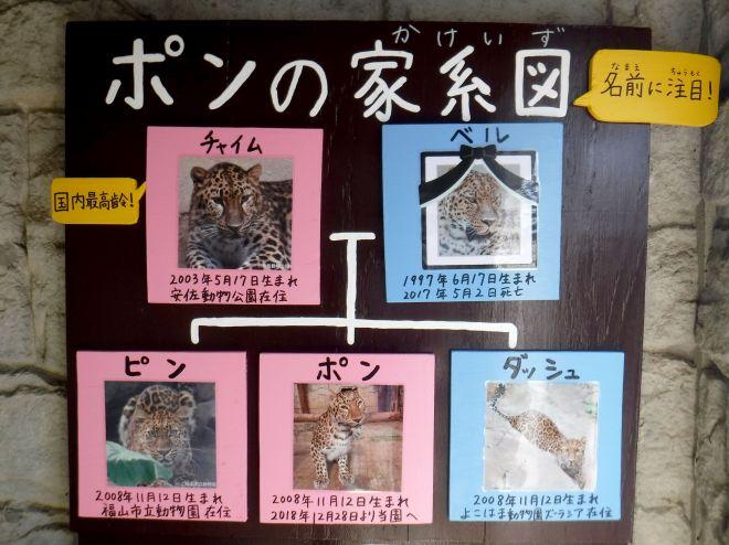 大牟田市動物園に貼り出されている「ポンの家系図」
