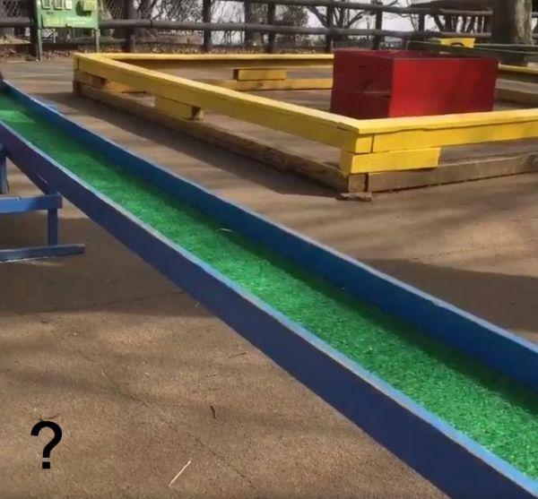 モルモットの「橋渡り」動画の一場面