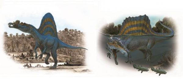 2014年までの研究に基づいて伊藤丙雄さんが描いたスピノサウルス(左)と15年以降のスピノサウルス=「小学館の図鑑NEO新版 恐竜」から