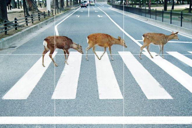 奈良市観光協会が制作したポスター(一部をトリミングしています)