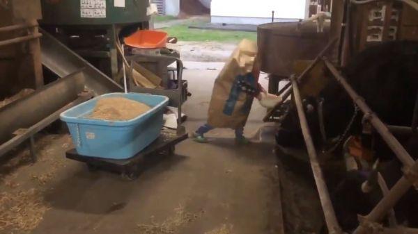 話題になっている「餌袋マン」動画の一場面。牛に餌をあげていると……