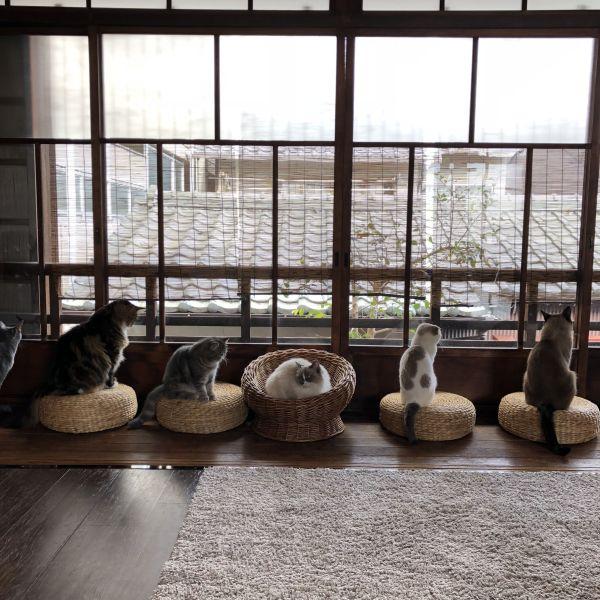 京都西陣にある築100年の町家猫カフェ「キャットアパートメントコーヒー」