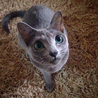 隠れている猫の名前は、ちっちゃいちゃん