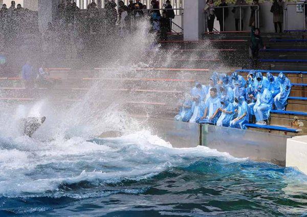 シャチから手荒い洗礼を受ける新入社員たち