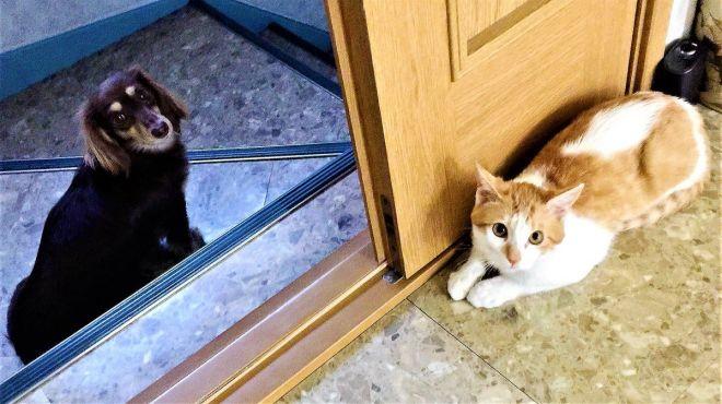 ハナコ(左)とタマスケ(右)
