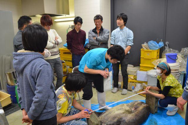 調査を見守る学芸員の日比野さん(後方右)と「自然史友の会」の会員のみなさん