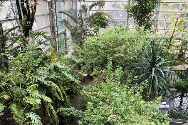 沖縄や南西諸島などの自然を再現した大温室=東京都足立区の足立区生物園、竹谷俊之撮影