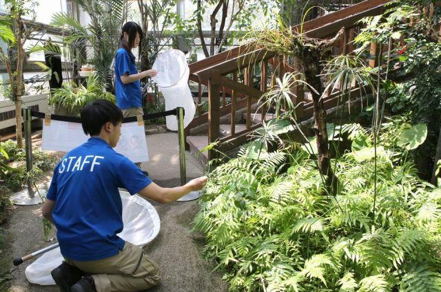 ツシマウラボシシジミの保全活動に取り組む足立区生物園の飼育員たち=竹谷俊之撮影