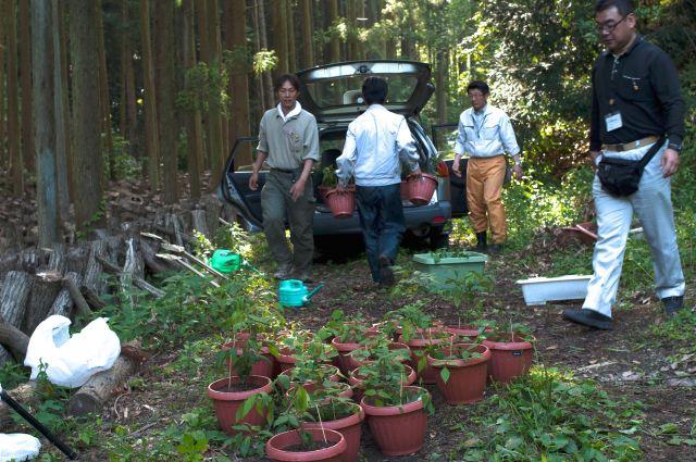 2013年6月にツシマウラボシシジミを発見し、緊急で行った保全対策の様子。植木鉢に入っているのが、ヌスビトハギ=日本チョウ類保全協会提供