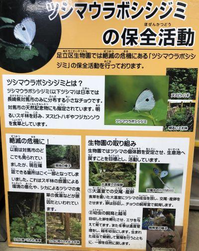 足立区生物園にあるツシマウラボシシジミの保全活動の説明ボード=竹谷俊之撮影