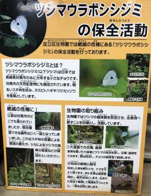 ツシマウラボシシジミの保全活動の説明ボード=2019年4月15日、東京都足立区の足立区生物園、竹谷俊之撮影
