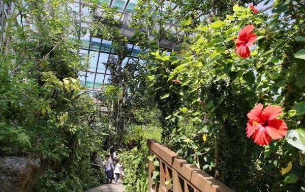 沖縄や南西諸島などの自然を再現した大温室=2019年4月18日、東京都足立区の足立区生物園、竹谷俊之撮影