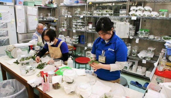 卵や幼虫、さなぎなどさまざまな成長段階のチョウを育てる飼育室=2019年4月18日、東京都足立区の足立区生物園、竹谷俊之撮影