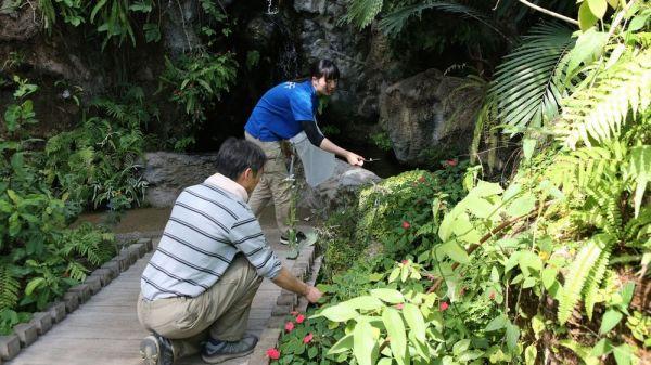 絶滅危惧種のツシマウラボシシジミの交配を手伝う生物園の飼育員ら=2019年4月15日、東京都足立区の足立区生物園、竹谷俊之撮影
