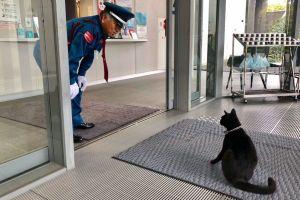 猫と警備員、1カ月ぶりの攻防! 花見の時期...