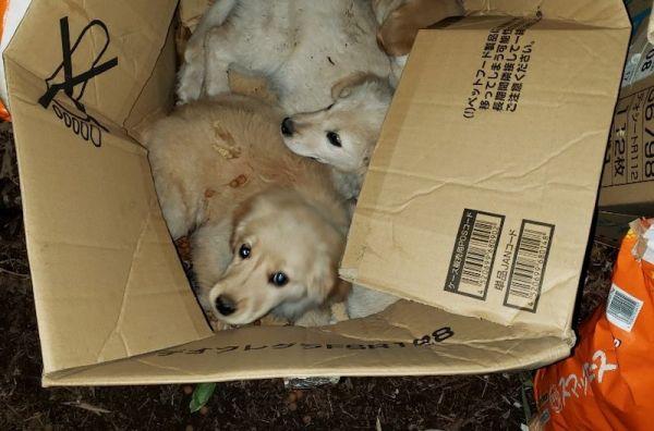 4月27日、宇都宮動物園の飼育員用の出入り口付近で発見された犬たち
