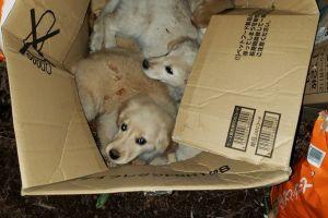動物園に捨て犬20頭、昨年末から計3回も… 悩んだ末にブログで公表