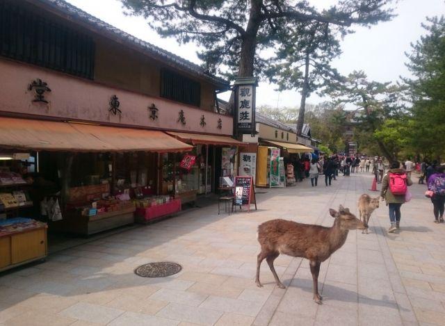 東大寺の売店。当然、鹿もいる。