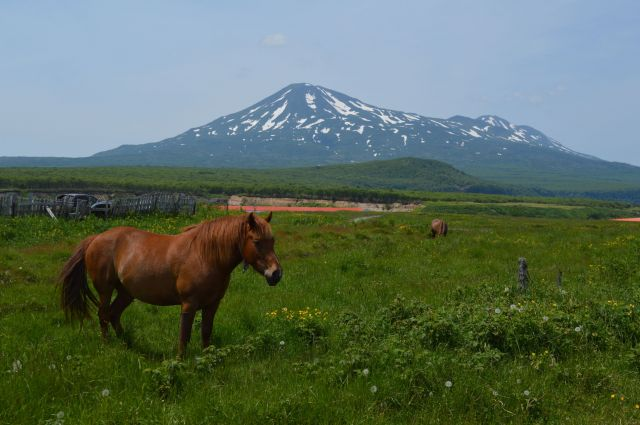 択捉島で2番目に高い散布山(ちりっぷやま、1582m)=2016年7月、択捉島別飛