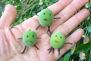 たった4日でお年寄りに… 梅の実で作った「子ども梅」の姿が衝撃的