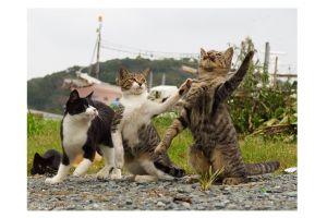 猫3匹で漫才? 「なん」「でや」「ねん」な1枚、写真家に聞きました