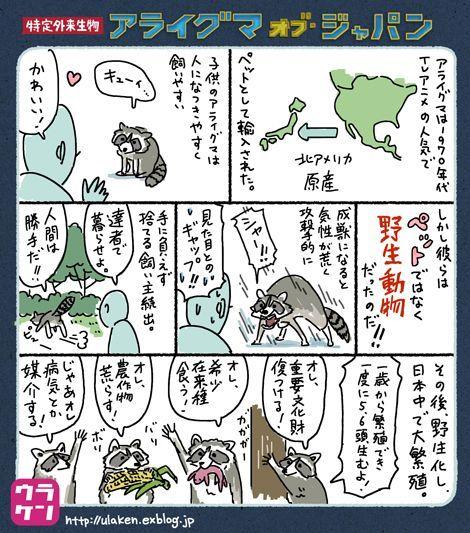 コミカルに描きつつ、アライグマの生態についてもおさえているイラスト=ウラケン・ボルボックスさん提供
