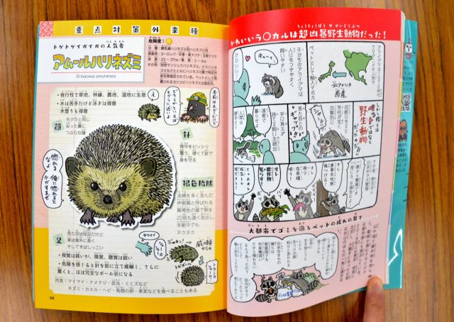 アライグマが日本にやってきた経緯を説明したマンガ(右)