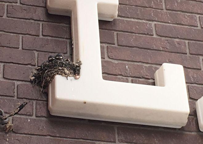 こんなところにツバメの巣が