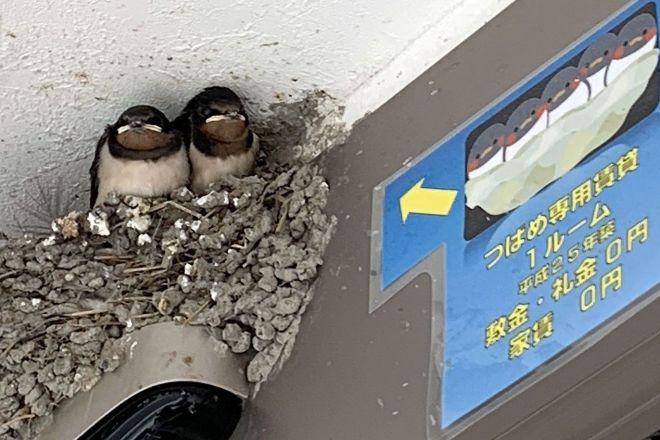 不動産屋の入り口にあるツバメの巣と、ユニークな貼り紙