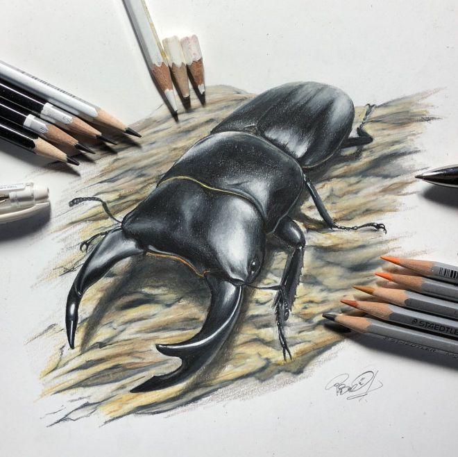 色鉛筆で描いたオオクワガタ