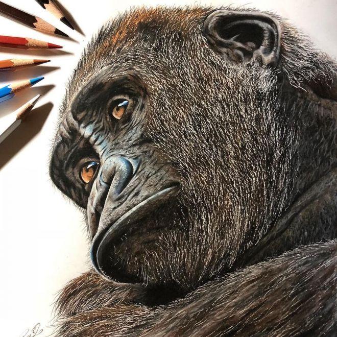 色鉛筆で描いたゴリラ