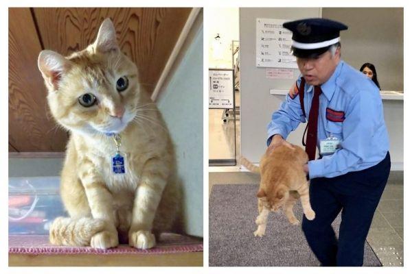 左が飼い猫として暮らすゴッちゃん。右は2018年に美術館に入ろうとして警備員に阻止された時の様子